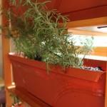 How-to: Indoor Herb Garden
