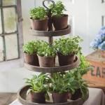 Indoor Gardening Inspiration