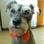 How-to: Halloween Doggie Bow Tie