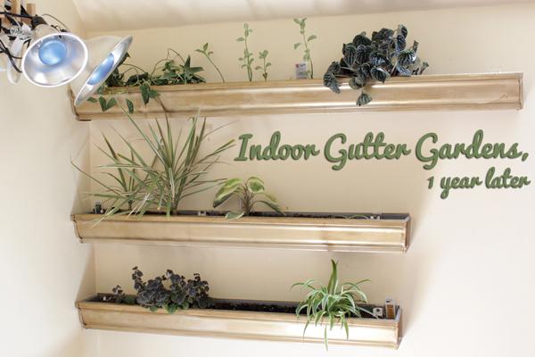 How-to: Maintan an Indoor Gutter Garden