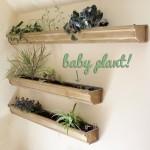 How-to: Maintain an Indoor Gutter Garden