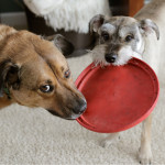 Holiday Gifts for Pets and What Not to Buy, Plus a Giveaway!