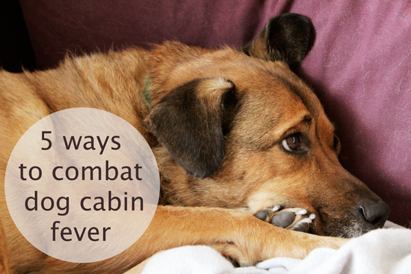 5 Easy Ways to Combat Dog Cabin Fever