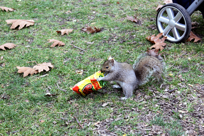 This squirrel stole my chips. :(